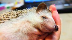 cute...tiny hand