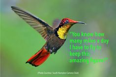 Don't eat like a #hummingbird Like a hummingbird, you need to override your instinct to eat voraciously.