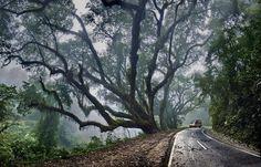 . forests, argentina, sweet trees, back roads, parqu nacion, domingo, cloud, national parks, beauty