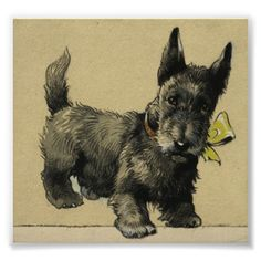 Scottish Terrier Drawing Poster from Zazzle.com