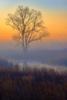 #NATURE #fog #trees