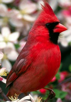 Love Our State Bird The Cardinal