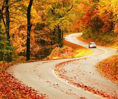 Driving on a beautiful fall season colors like this makes me get hypnotized on the natures awesome beauty! How about you people? Repin it, like it, and share your comments (: http://bit.ly/HkpNKT