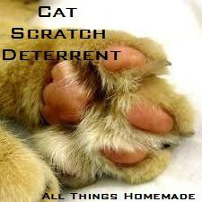 Cat Scratch Deterrent  Fill an empty spray bottle with water and add 10 drops Eucalyptus Essential Oil and 10 drops Lemon Essential Oil. Shake well and spray on areas you do not want your cat to scratch.
