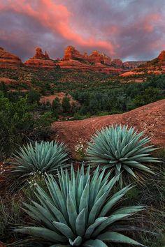 ✯ Agave On The Rocks - Mitten Ridge - Sedona, AZ