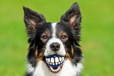When is the last time you took a good look at your dog's mouth? Did you know that bad teeth or gums can lead to some serious issues throughout the body?