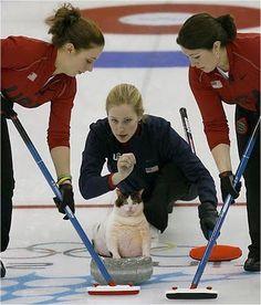 curling cat