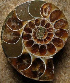 Ammonite Structure from Majuga Madagascar - Sea Moon