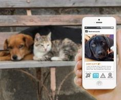 An App for Finding Missing Pets.