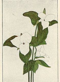 Trillium flowers, from Garden Flowers of Spring ~ 1917.