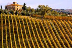 wines, tuscani, the vineyard, wine tasting, italian wine, tuscany italy, italy travel, wineri, tuscan style