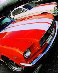 ford mustang, nice hors, dreami car