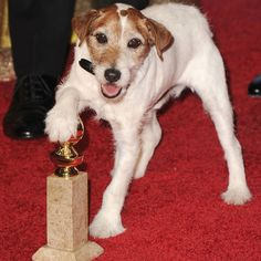 Uggie the Entertainer!
