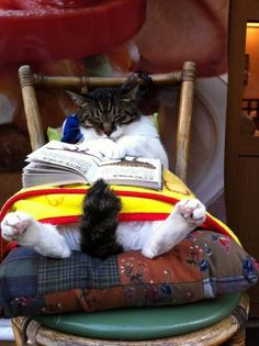 bedtime stories, book worms, anim, funny cats, cat naps