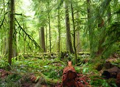 Cathedral Groves, Vancouver Island, British Columbia