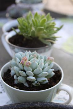 Plant in a teacup