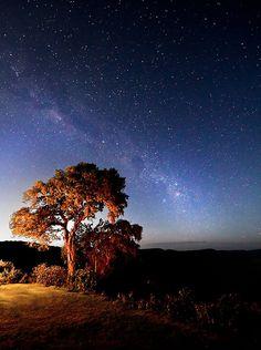 Milky Way  by Chris Owen