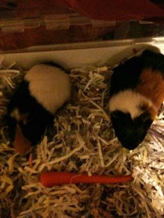 """I used shredded paper as bedding for my guinea pigs. Rather than just throwing the paper away :)"""