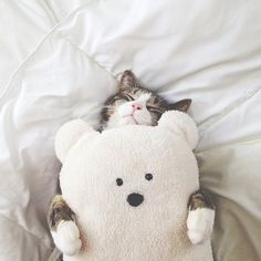Bear hug (or should i say kitty) :)