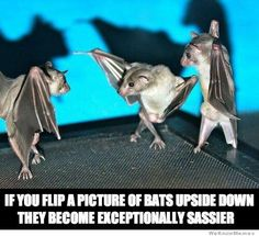 Funny Pictures of the Day - 25 Pics @ http://funnypictures247.com/post/funny-pictures-804/