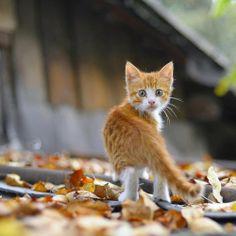 An Autumn moggy