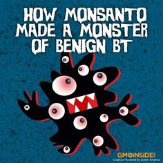 How Monsanto Made Of Monster Out Of Benign BT. Read More Here: http://najmasadeque.wordpress.com/2013/08/15/how-monsanto-made-a-monster-of-benign-bt