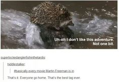 it's okay jawn hedgehogs can swim (unless they're sonic)
