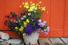 great color combo, especially against orange flower containers, color combos, colors, annual flowers, container plants, flower pots, deck, container flowers, container gardening
