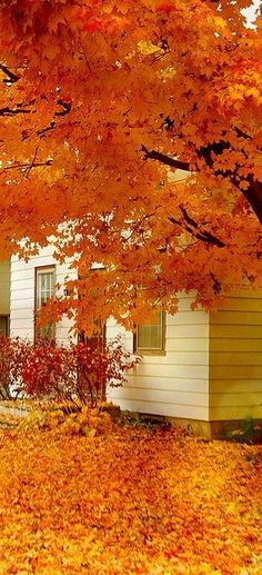 We love the fall because of all the orange leaves #orange