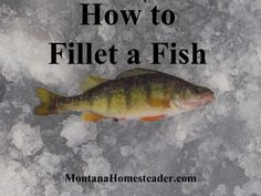 Access to an electric knife makes quick work out of a large catch.... How to Fillet a Fish - Montana Homesteader