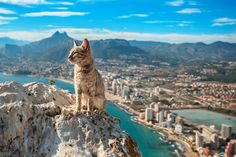 Majestic Cats Watching Over The Town Of Calp In Spain