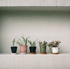 of potted plants.