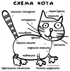Где у котов и кошек находиться урчальник