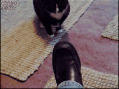Hey Cat, Shine My Shoes. | 20 Funny CatGIFs