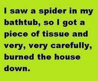 funni stuff, laugh, spiders, giggl, true