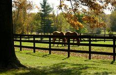 horse pasture <3