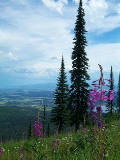 Summer in Whitefish, Montana
