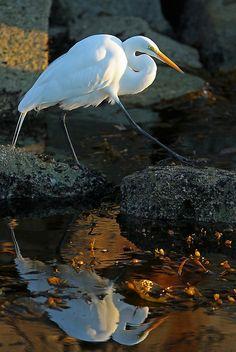 Beautiful Bird & Reflection