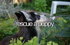 bucketlist, animals, puppies, animal shelters, dogs