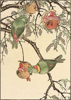 Imao Keinen, Pomegranate, Lovebird, 1891. | Source: http://petitcabinetdecuriosites | #pomegranates #birds #parrots #illustration