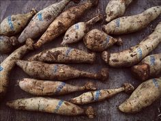A How-To Guide for Taking Dahlia Cuttings from Tubers