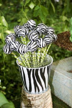 Zebra cake pops at a Jungle Party