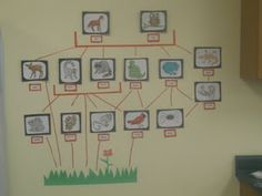 Food web display