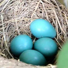 Robin's eggs. My favorite color.