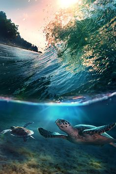 Tropical paradise with turtles, Maldives