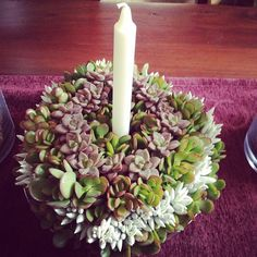 A gardeners Christmas wreath.  http://www.russwholesaleflowers.com/wholesale-succulent-sale  RusswholesaleFlowers.com offers the best wholesale succulent prices available to the public online.  wholesale succulents for bouquets, special events, wreaths, diy and more.  3 different sizes to meet your needs.