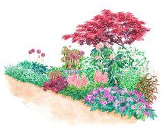 Garden Plans for Shady Spots: Giant Allium; Seibold Primrose; Penstemon Husker Red; Balloon Flower; Francee Hosta; June Hosta; Purple Huechera; English Bluebells; Pink and White Azaleas