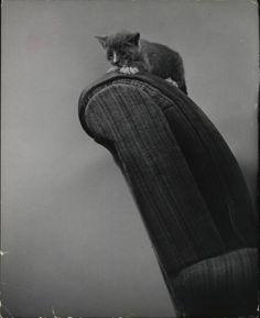 ... by Nina Leen, 1952. ≧^◡^≦