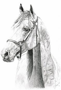Art - pencil sketch Horse