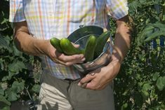 How to Grow Cucumbers in a 5-Gallon Bucket